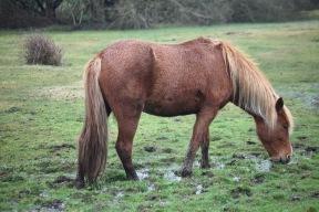 Pony in waterlogged grass