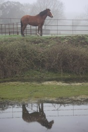 Pony and reflection