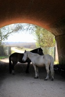 Ponies under bridge