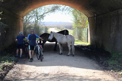 Cyclists skirting ponies under bridge
