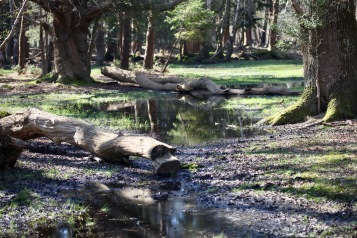 Waterlogged forest, fallen trees