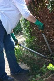 Jackie pruning