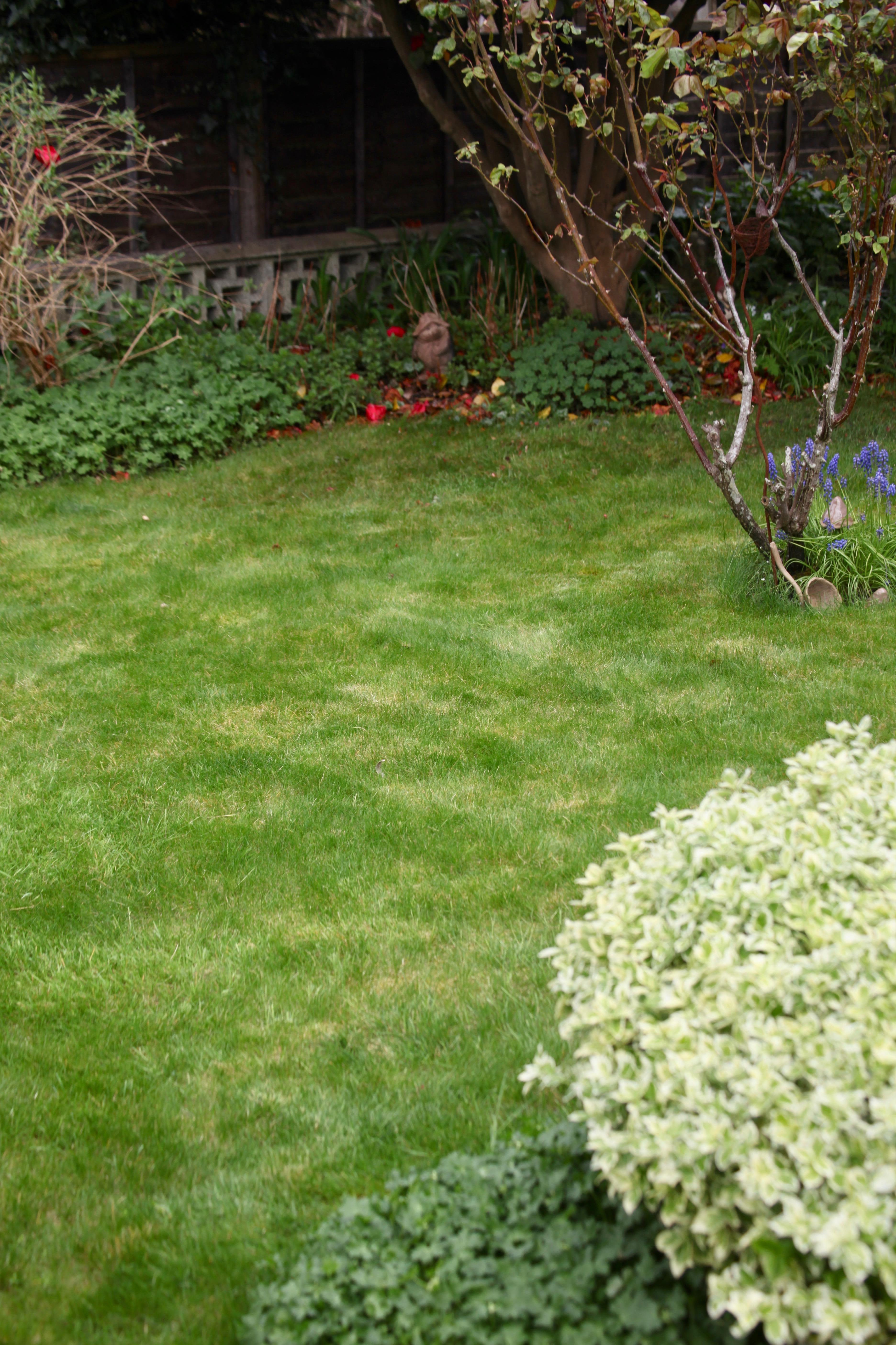 Grass mowed