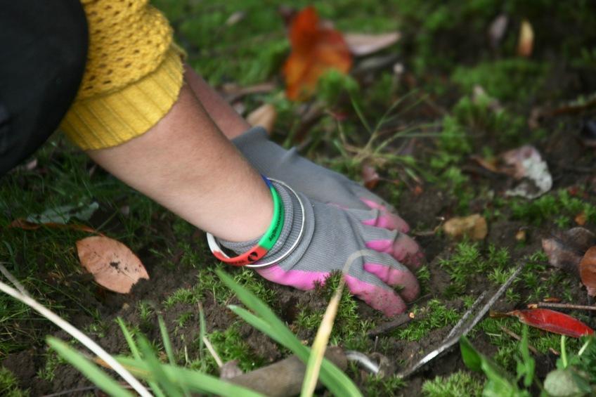 Danni's gloved hands weeding