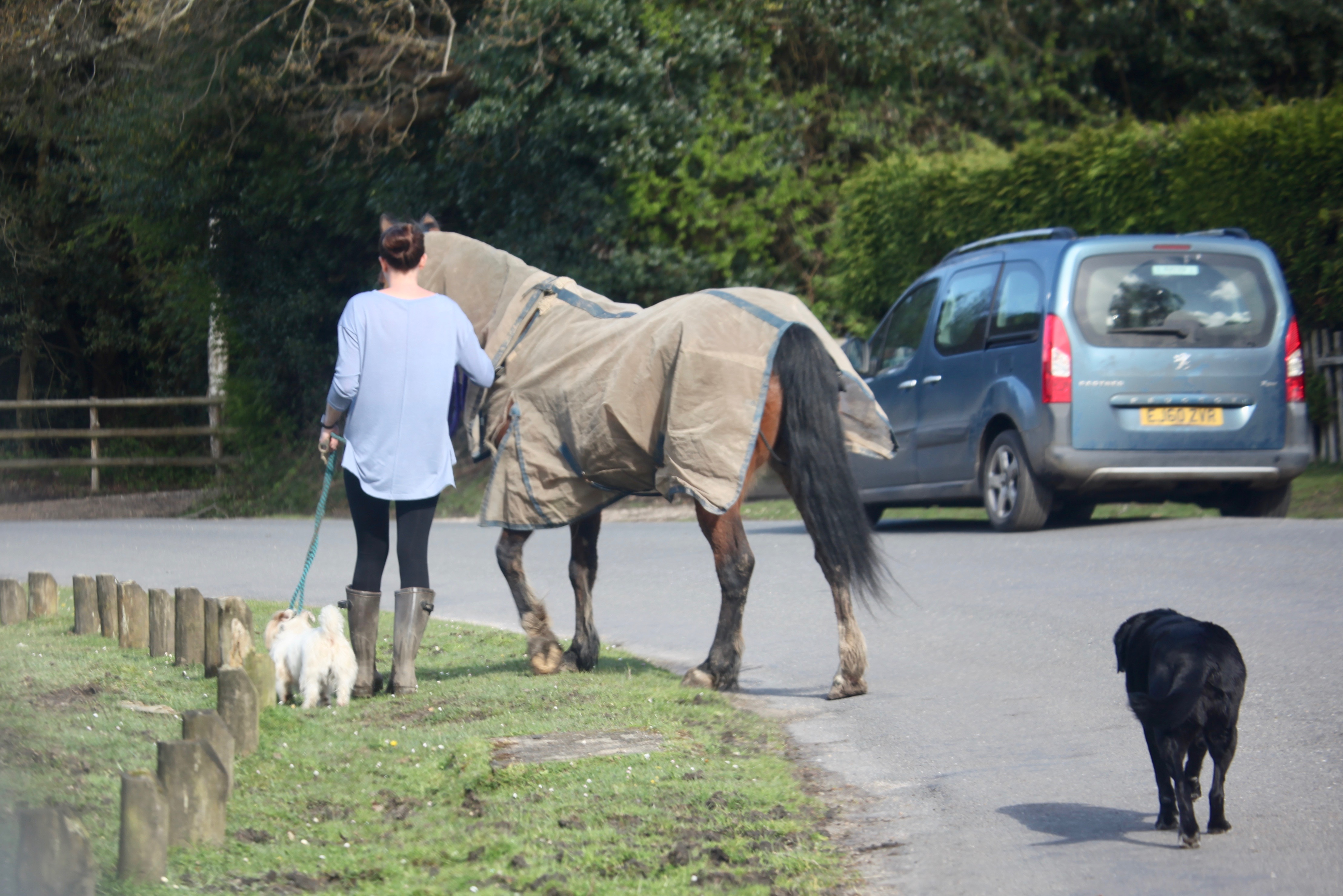 Dog following woman leading another and a horse