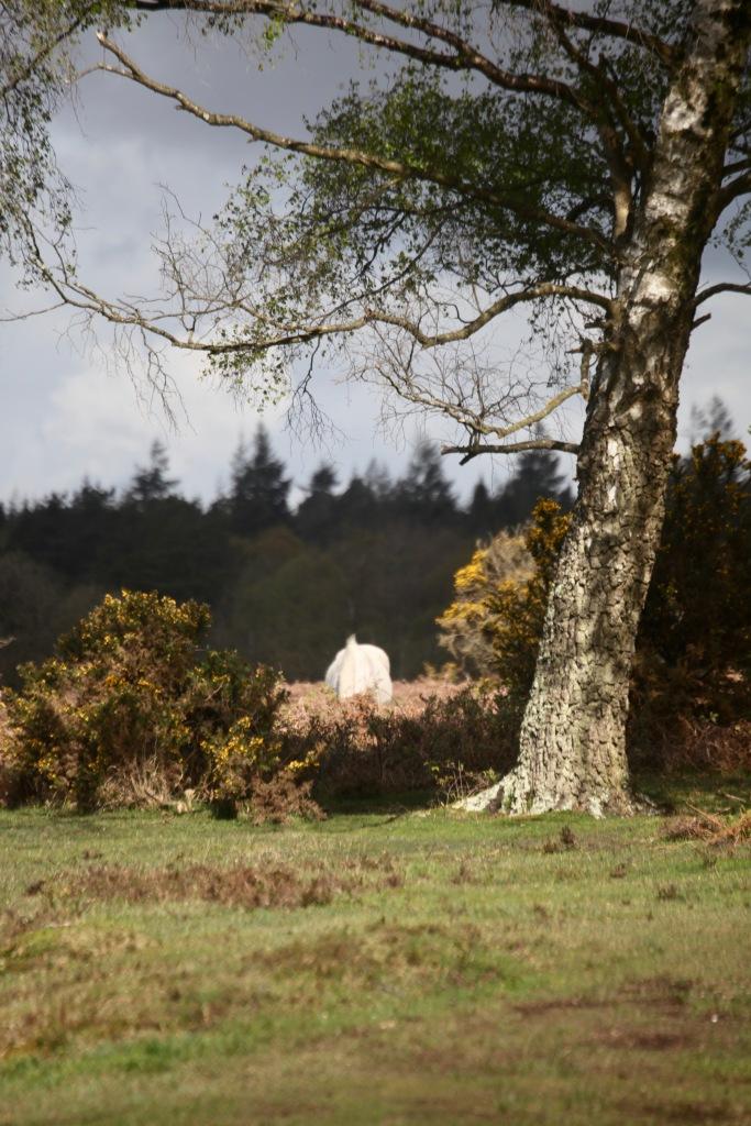 Pony in landscape