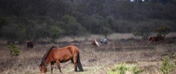 Ponies in landscape