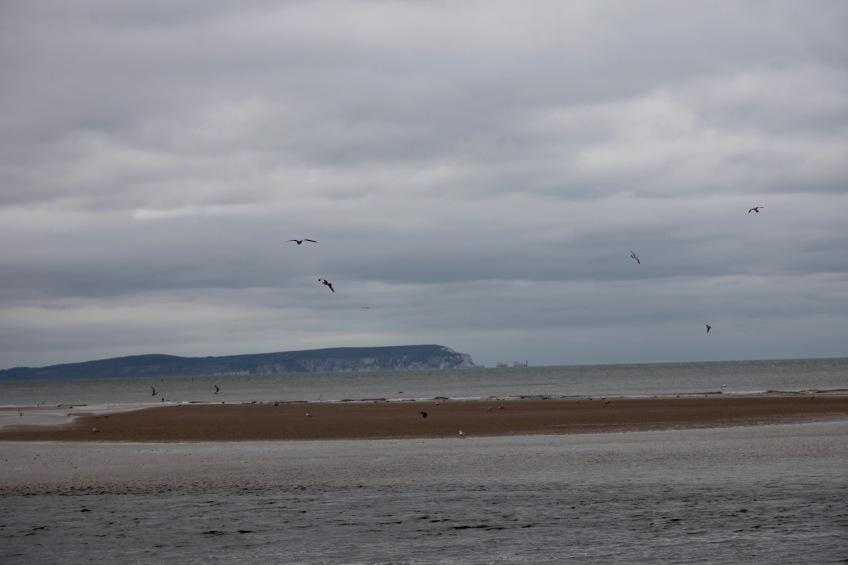 Isle of Wight, The Needles, sandbank, gulls
