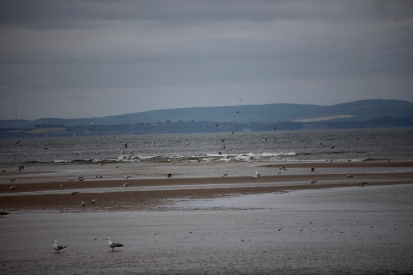 Gulls on sandbank, Isle of Wight