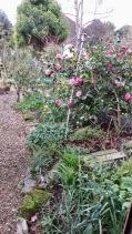 Garden view along Gazebo Path