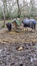 Horses at hay trough