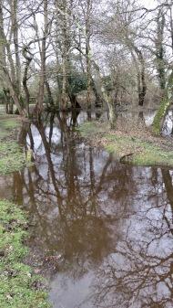 Waterlogged terrain