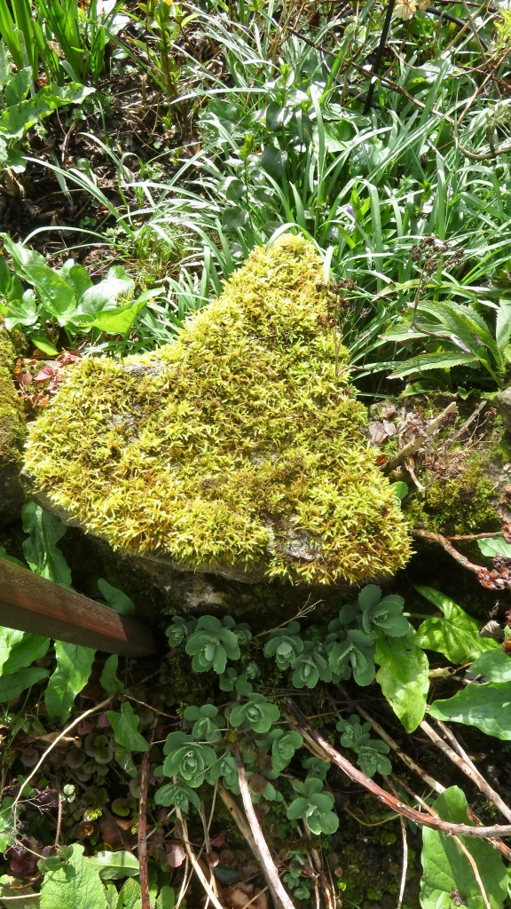 Moss and sedum spectabalis