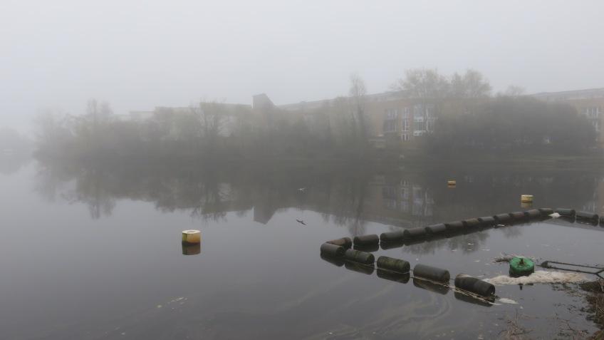 Gull over Lymington River in mist