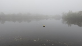 Gull over Lymington River in mist