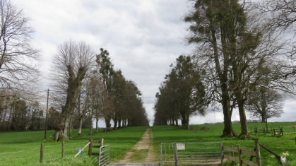 Avenue of mistletoe