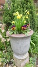 Daffodils and pansies in new urn