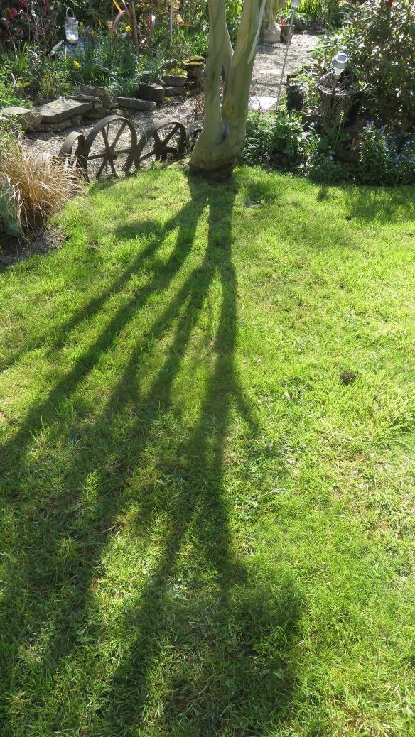 Eucalyptus shadow