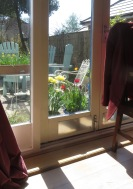 Tulips and daffodils through window