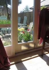Tulips and daffodils through window