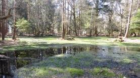 Waterlogged terrain, reflections