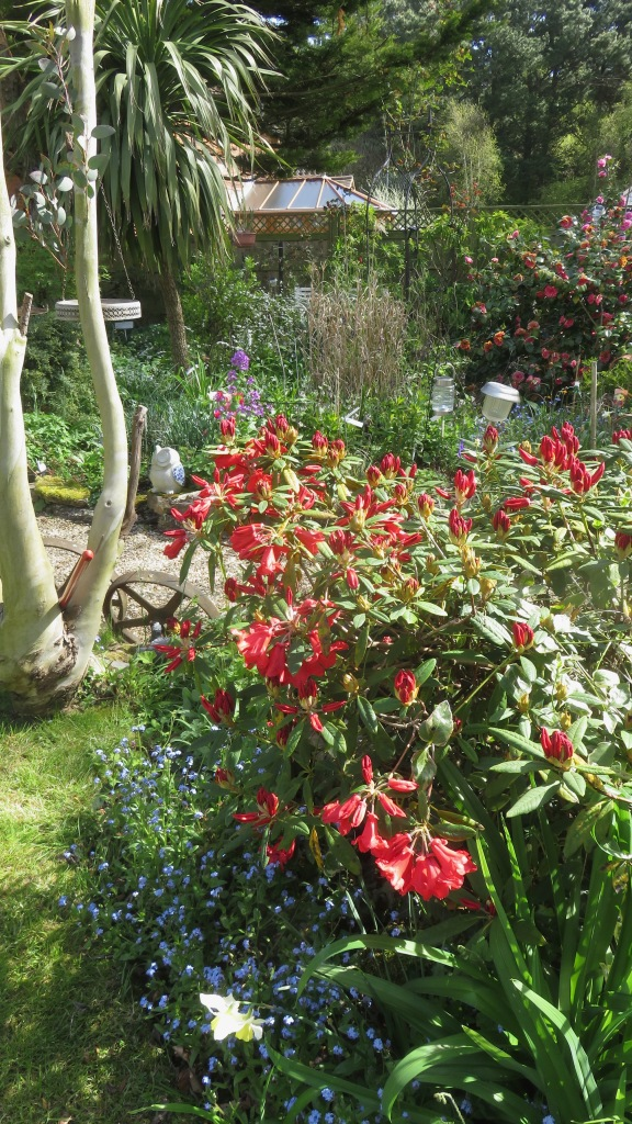 Garden view across Margery's and Palm Bed