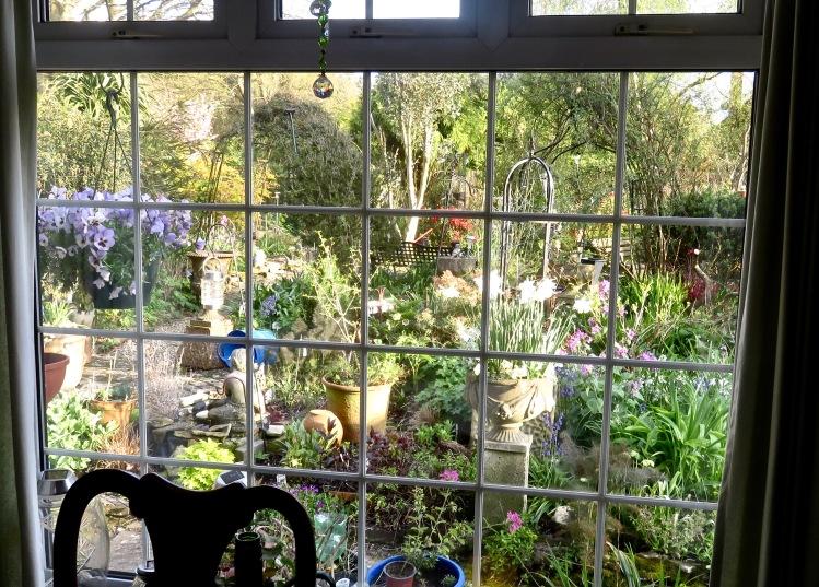 Garden view from kitchen