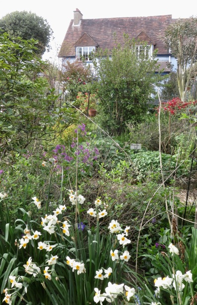 Garden view from Cryptomeria Bed across grass to Kitchen Bed