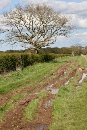 Muddy track