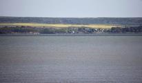 Rape fields on Isle of Wight