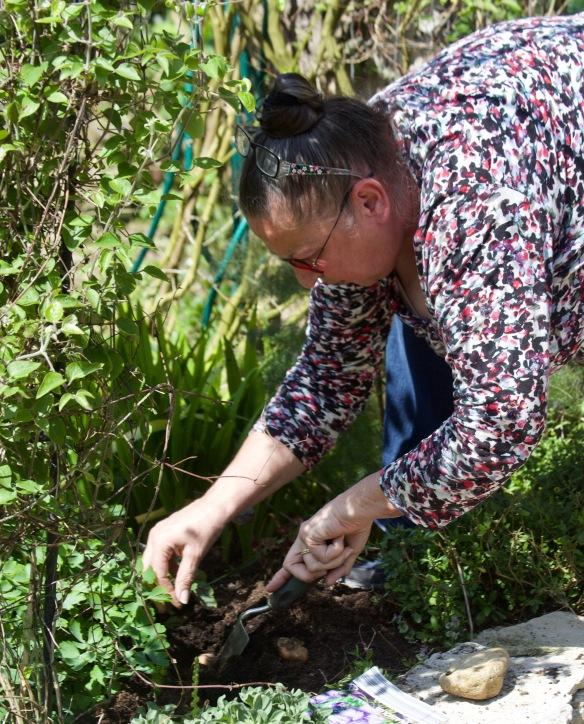 Jackie planting gladioli