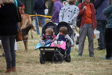 Children in buggy, dogs, crowd