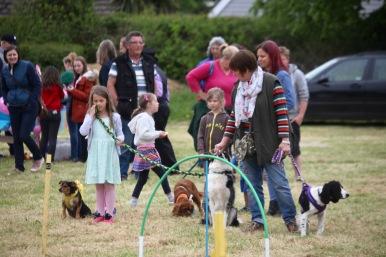 Dog agility contest lining up