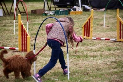 Dog agility contest