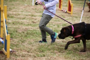 Dog agility contest