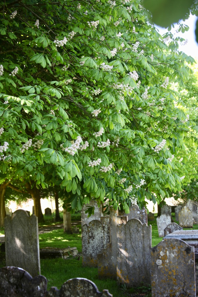 Gravestones and chestnut candelabra