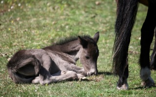 Foal and mare's legs
