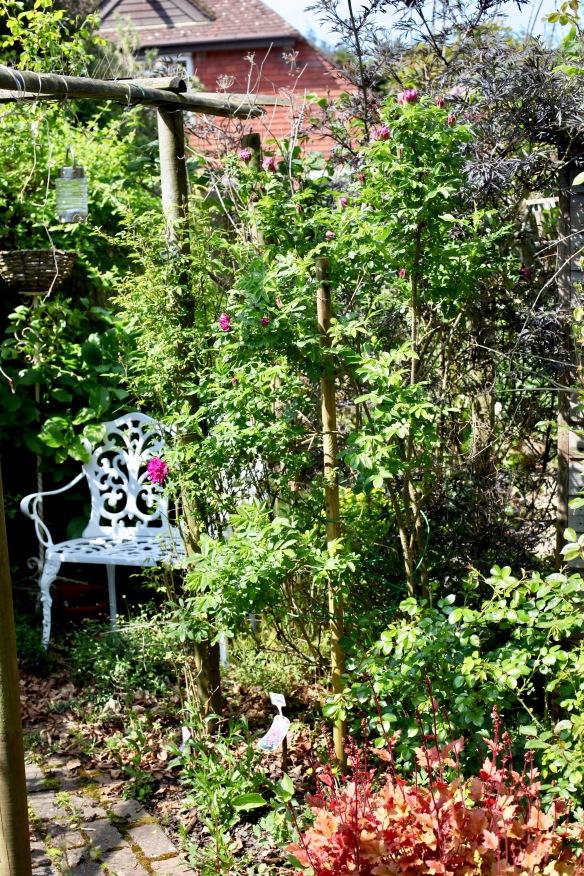 Rosariae de L'Hay corner of Rose Garden