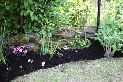 Begonia planting