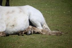 Pony's feet