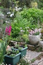 Gladioli, erigeron, alliums, petunias, clemais Marie Boisselot