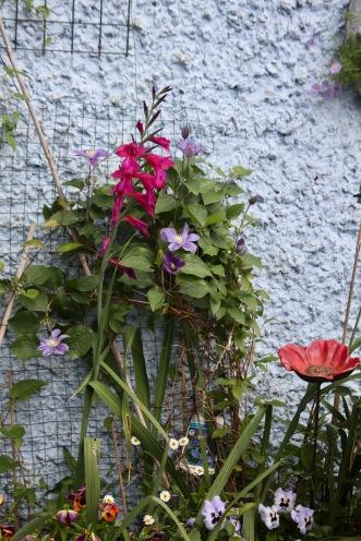 Gladioli, clematises, erigeron, pansies