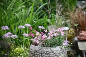 Petunias and alliums