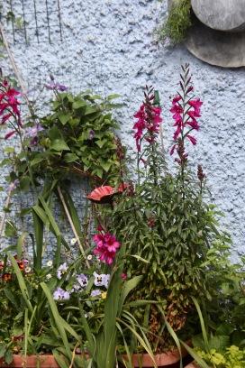 Gladioli, pansies, erigeron