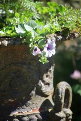 Petunia in iron urn