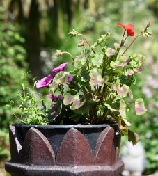 Petunias and geraniums in chimney pot