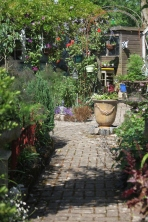 Brick Path to garden shed