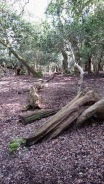Woodland with fallen trees