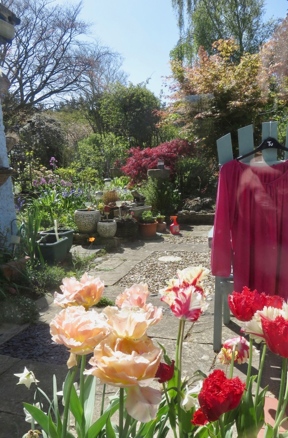 Red tinges through garden