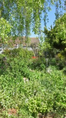 Garden view across Weeping Birch Bed